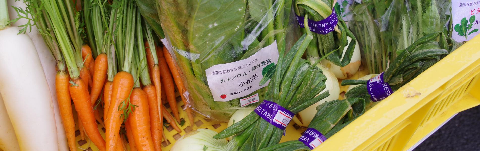 ハーベストで収穫された野菜
